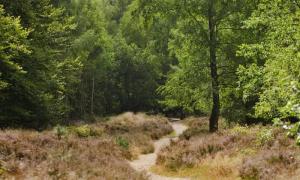 Natuurmonumenten heide Kaapse bossen
